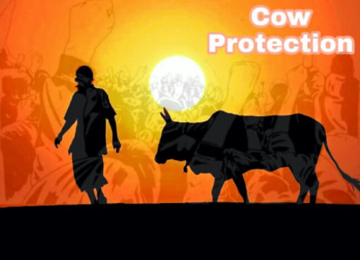 Cow Slaughter Ban, Cow Protection, Mob Lynching for beef eating