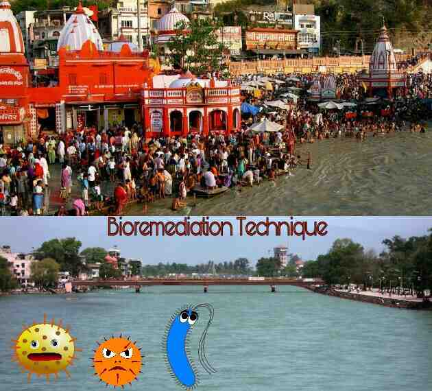 Bioremediation for Clean Ganga Project, Clean Ganga Project, Clean Ganga Project under bioremediation