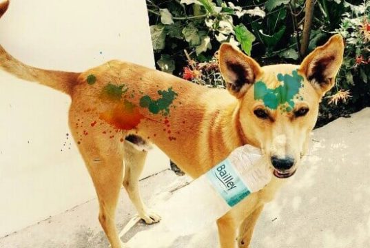 Stray Dog During Holi, Victims of Holi, Holi Victims,