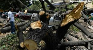 Tree Fell off on Andheri Resident, Andheri Man dies tree fallen