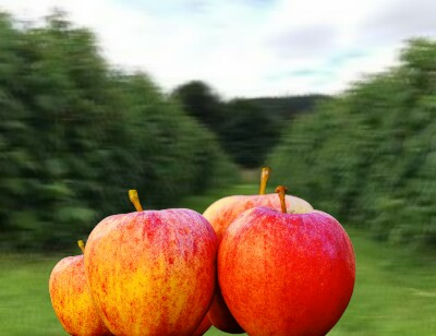 Apples, Apples benefits, Apples for stamina, Apples ajanta news