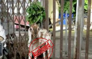 Ticketless Goat Auctioned, ticketless travelling goat owner fined, penalty fined on goat auctioned