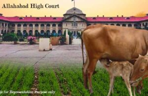 Cows be declared as National Animal, Cow Slaughteering ban, cow slaughteering ban by Allahabad high Court, Allahabad high court comments on cow slaughteering